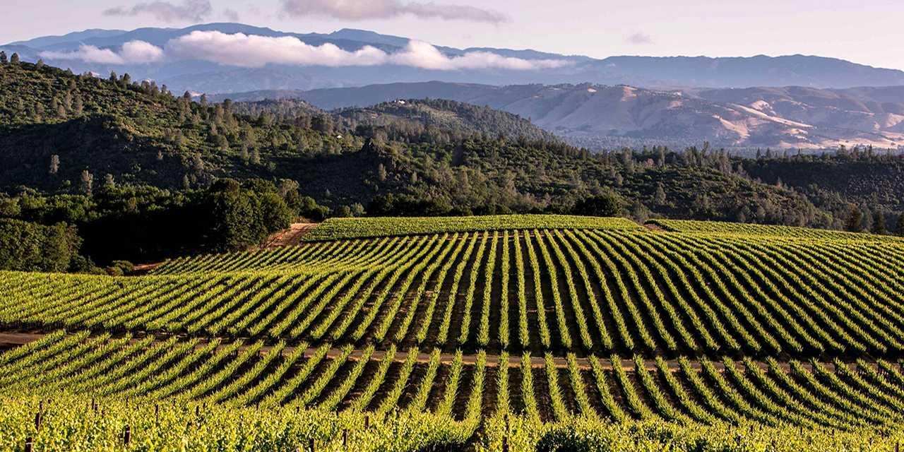 Wine Tours Near Santa Barbara Ca