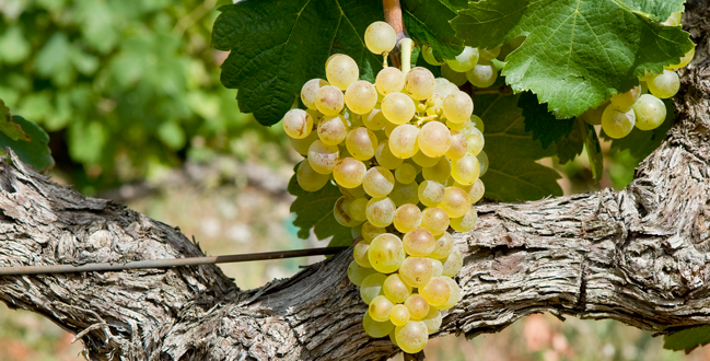 France's Rhône Valley, the Place to Go for White Wines for the Winter