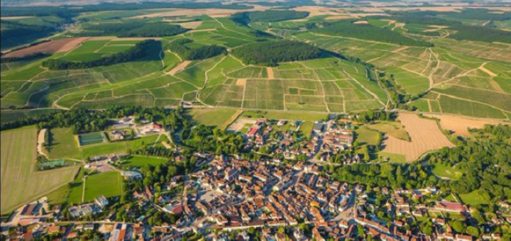 Chablis Vineyards Devastated by Disastrous Weather Conditions
