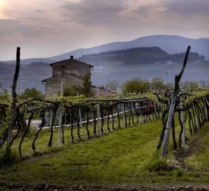 Fall in Love with Wines from la Bella Valpolicella
