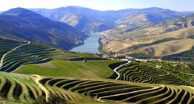 Exploring the Underrated Wines of Portugal: Douro and Dão