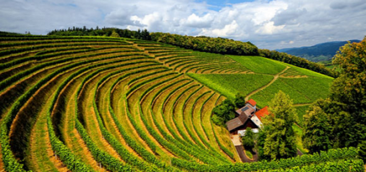 Burgundy Wines: To Understand them is to Love them