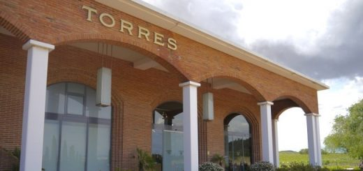 Findlater Wines - Torres Winery