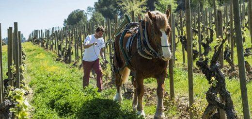 Preparation is Key: Mind-Opening Biodynamic Wines