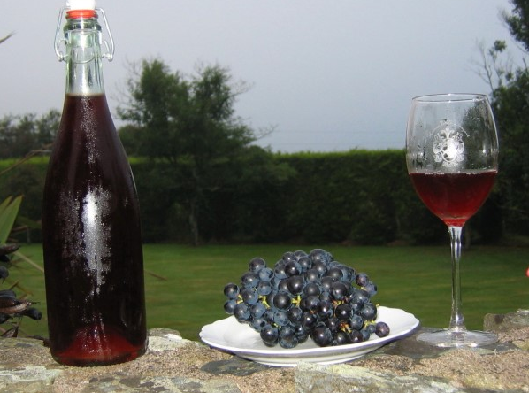 The Past, Present and Future of Winemaking in Ireland thomas walk