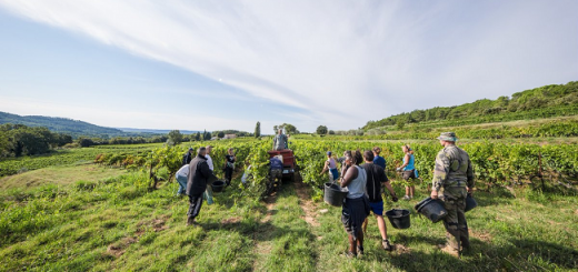Game of Rhones - Brace Yourselves, Great Wines are Coming Cornas Vineyards with Rhone River