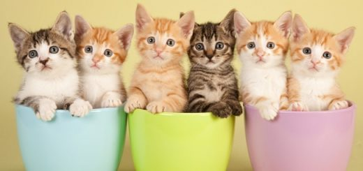 Dublin New Cat Lounge is the Purrfect Spot for Feline Fans feat