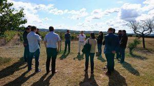 ield of Dreams - Gerard Bertrand's Spiritual Quest to Reimagine the Languedoc