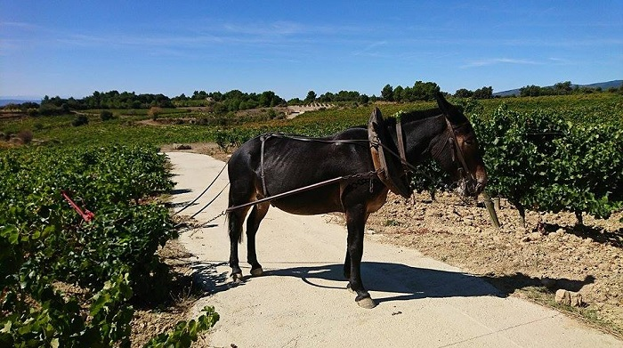 Field of Dreams A Spiritual Quest to Reimagine the Languedoc 7