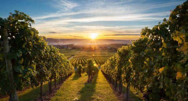 New Boundaries of Wine