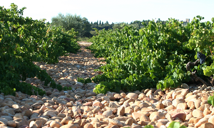 Rhone Wines you Need to Try 2