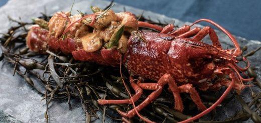 Saba lobster 2